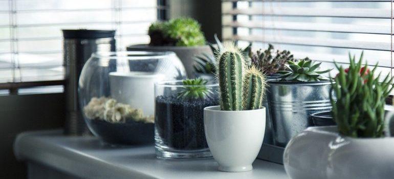 Plants in pots.