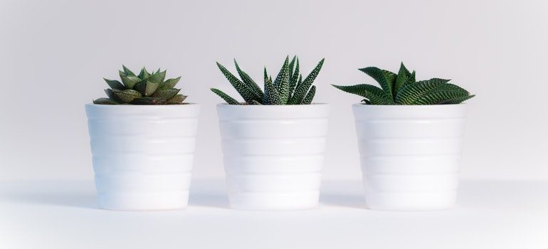Three potted plants are items you shouldn't store long-term.