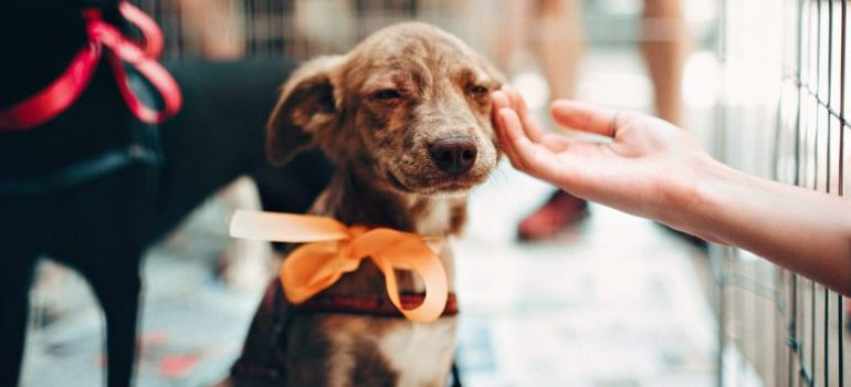 small puppy with ribbon