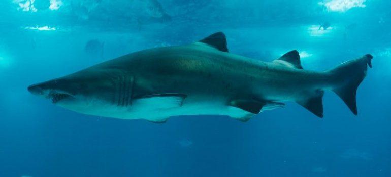 aquarium-shark
