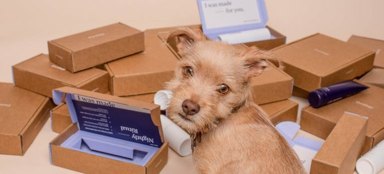 Dog next to boxes for relocating a veterinary clinic