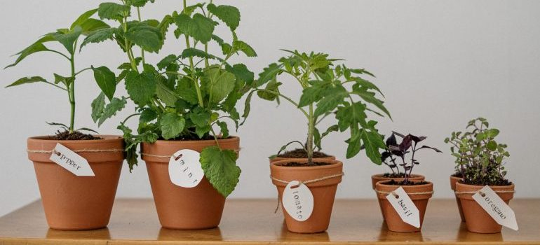 photo-of-potted-plants-on-wooden-table
