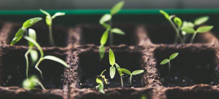 lants-macro-growth-soil