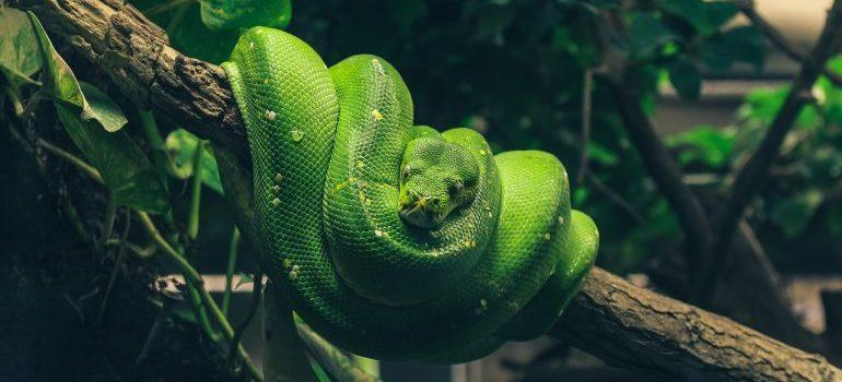 Green snake inside a terrarium