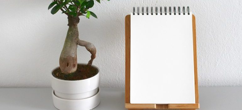 A plant next to a notepad.